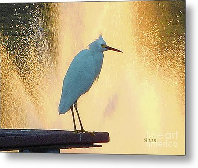 Birds And Fun At Butler Park Austin - Birds 3 Detail Macro Metal Print by Felipe Adan Lerma