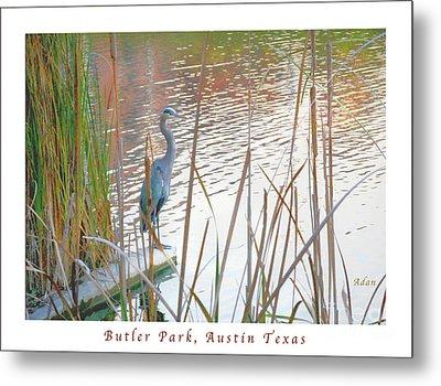 Birds And Fun At Butler Park Austin - Birds 4 Poster Greeting Card Metal Print by Felipe Adan Lerma