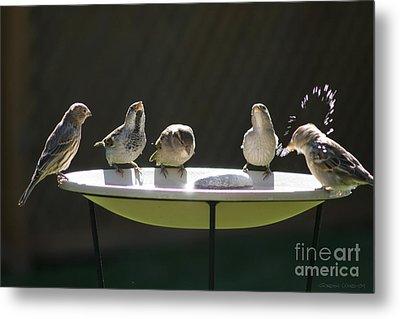 Birds Drinking From Bird Bath In Summer Sunshine Metal Print by Gordon Wood
