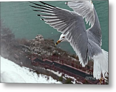 Metal Print featuring the photograph Bird's Eye View by Charline Xia