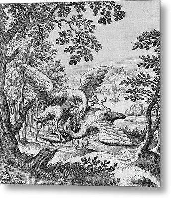 Birds Fighting From Musaeum Hermeticum, 1678 Metal Print