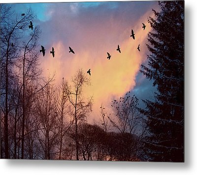 Metal Print featuring the photograph Birds Fly by Vladimir Kholostykh