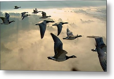 Birds In Flight Metal Print by Digital Art Cafe