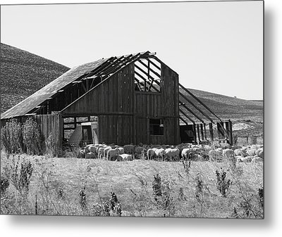 Birds Landing Barn Metal Print by Troy Montemayor
