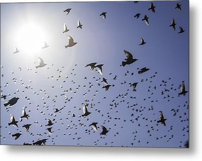 Metal Print featuring the photograph Birds by Lynn Geoffroy