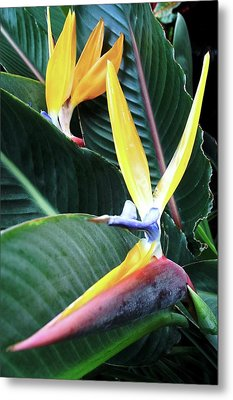 Birds Of Paradise With Leaves Metal Print