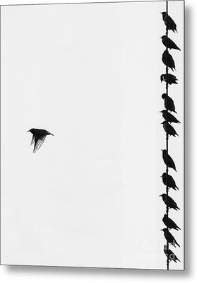 Birds On A Wire Metal Print by Jim Wright