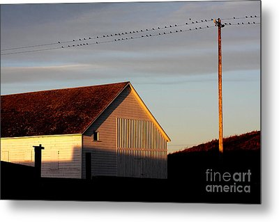 Birds On A Wire Metal Print by Wingsdomain Art and Photography