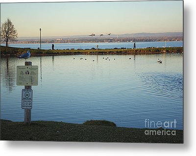 Birds On The Ottawa River Metal Print