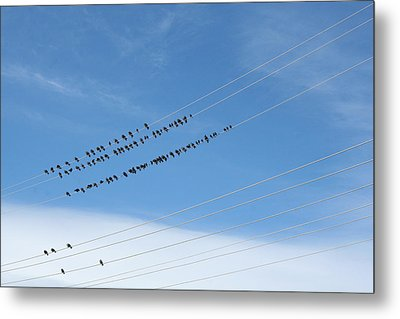 Birds On Wires Metal Print