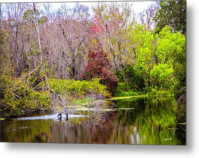 Metal Print featuring the photograph Birds Playing In The Pond 3 by Madeline Ellis