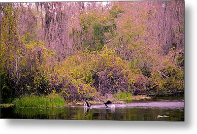 Metal Print featuring the photograph Birds Playing In The Pond 2 by Madeline Ellis