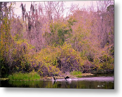 Metal Print featuring the photograph Birds Playing In The Pond 1 by Madeline Ellis