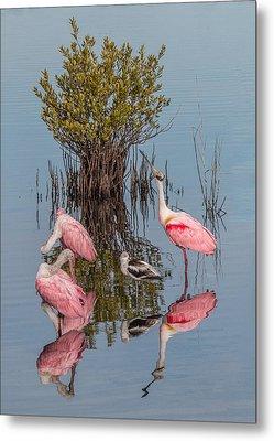 Birds, Reflections, And Mangrove Bush Metal Print