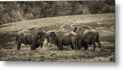 Metal Print featuring the photograph Bison 1 - Pano by Joye Ardyn Durham