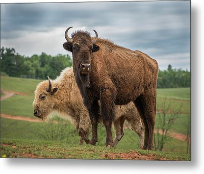Metal Print featuring the photograph Bison 10 by Joye Ardyn Durham