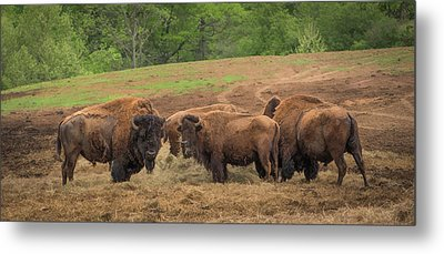 Metal Print featuring the photograph Bison 2 by Joye Ardyn Durham