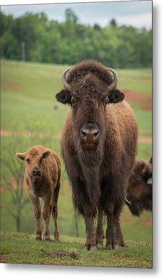 Metal Print featuring the photograph Bison 4 by Joye Ardyn Durham