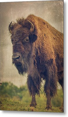 Metal Print featuring the photograph Bison 8 by Joye Ardyn Durham