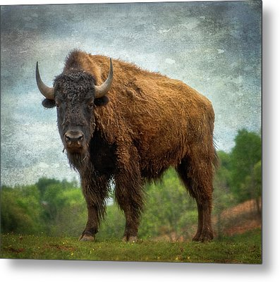 Metal Print featuring the photograph Bison 9 by Joye Ardyn Durham