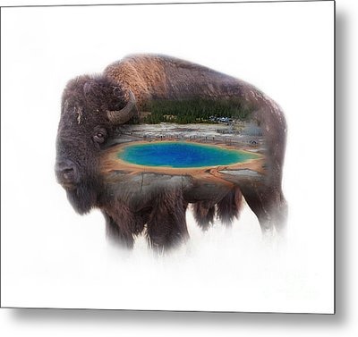 Bison And Great Prismatic Spring Double Exposure Metal Print