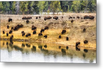 Bison At Indian Pond Metal Print