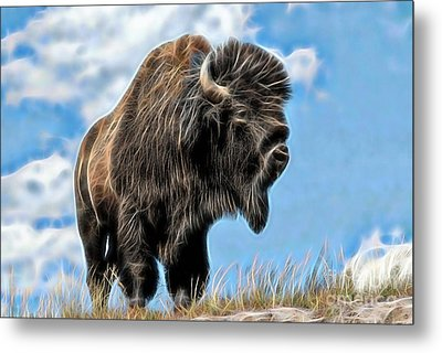 Bison Collection Metal Print by Marvin Blaine