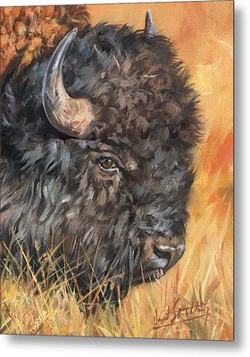 Metal Print featuring the painting Bison by David Stribbling