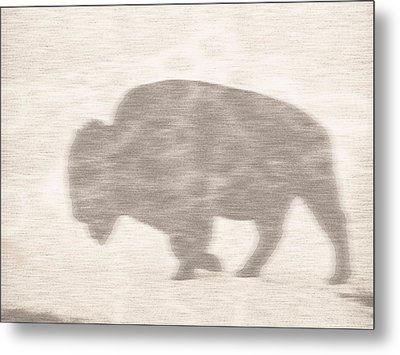 Bison Memory Metal Print by Anthony Robinson