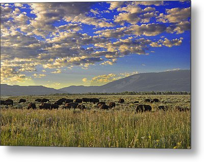 Bison On Antelope Flats Wy Metal Print by Vijay Sharon Govender