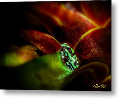 Metal Print featuring the photograph Black And Green Dart Frog In The Red Bromeliad by Rikk Flohr
