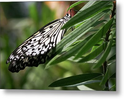 Black And White Butterfly -  Metal Print