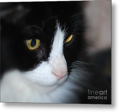 Metal Print featuring the photograph Black And White Cat by Lila Fisher-Wenzel