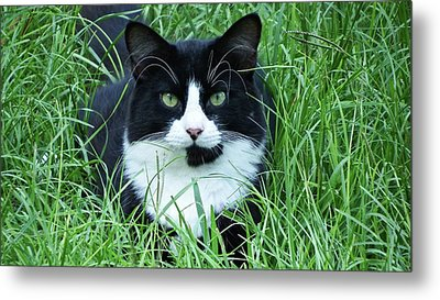 Black And White Cat With Green Eyes Metal Print