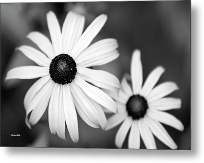 Metal Print featuring the photograph Black And White Daisy by Christina Rollo