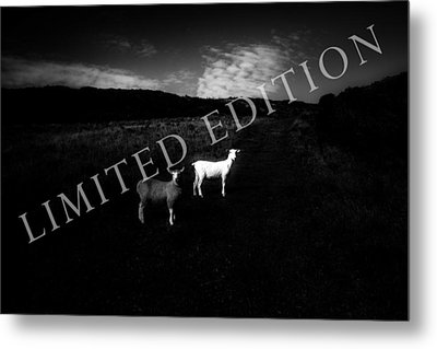 Black And White Metal Print by Dorit Fuhg