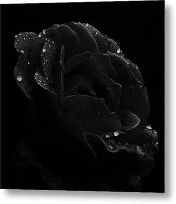 Black And White Flower Fifteen Metal Print by Kevin Blackburn