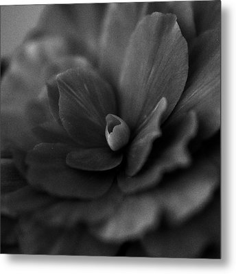 Black And White Flower Fifty Metal Print
