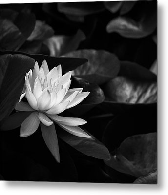 Metal Print featuring the photograph Black And White Flower Nine by Kevin Blackburn