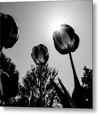 Metal Print featuring the photograph Black And White Flower Thirty One by Kevin Blackburn