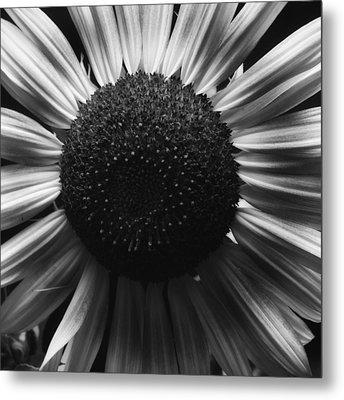 Black And White Flower Twelve Metal Print by Kevin Blackburn