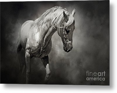 Black And White Horse - Equestrian Art Poster Metal Print