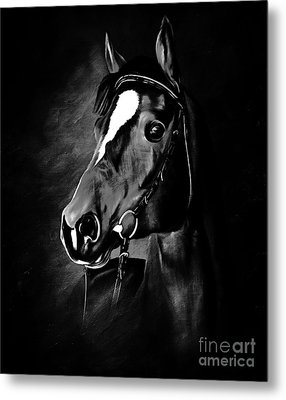 Black And White Horse Face Metal Print by Gull G