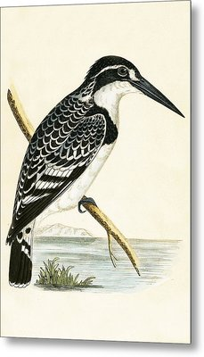 Black And White Kingfisher Metal Print by English School
