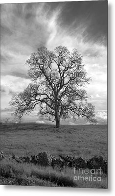 Black And White Oak Tree Metal Print