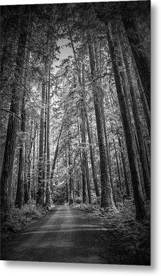 Black And White Of A Road In A Vancouver Island Rain Forest Metal Print by Randall Nyhof