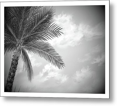 Metal Print featuring the digital art Black And White Palm by Darren Cannell