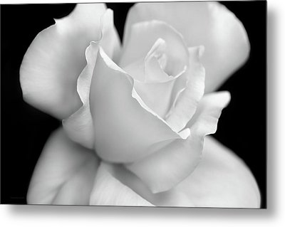 Metal Print featuring the photograph Black And White Rose Flower by Jennie Marie Schell