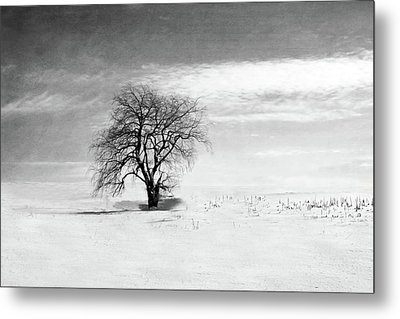 Black And White Tree In Winter Metal Print by Brooke T Ryan