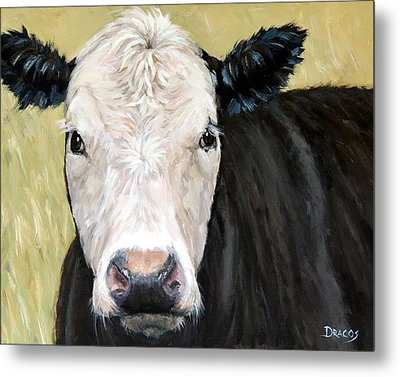 Black Angus Cow Steer White Face Metal Print by Dottie Dracos